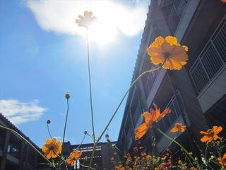 太陽と花_s.JPG