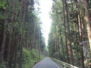 杉の木立_s.JPG