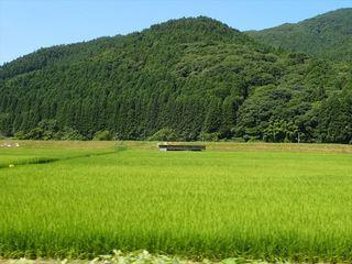 緑_s.JPG